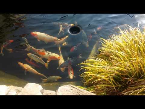 Pond update April 2015