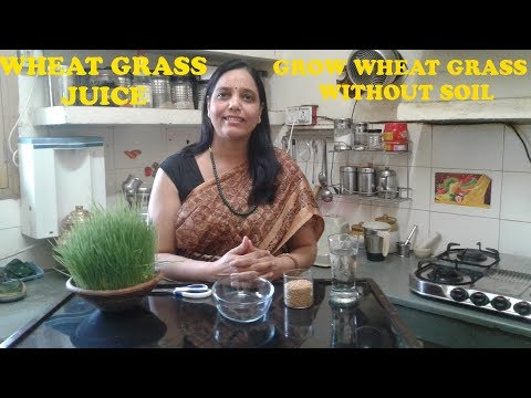 Wheat grass (Gehu ka Jwara) Juice Recipe - How to Grow wheat grass