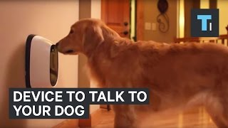Device to talk to your dog