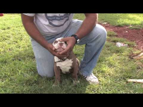 Dog Training & Care : How to Get a Puppy to Stop Biting