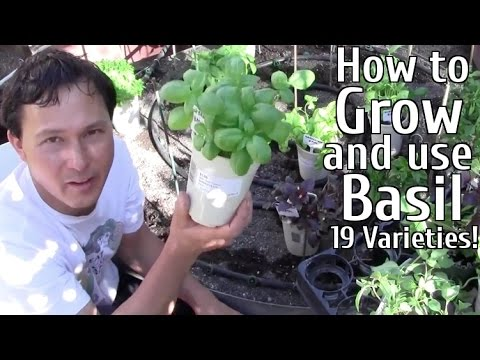 How to Grow and Use 19 Varieties of Basil