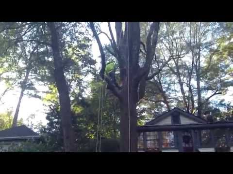061 pulling up chainsaw