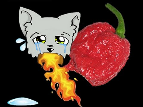 First time eating a Carolina Reaper