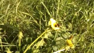 Video0024