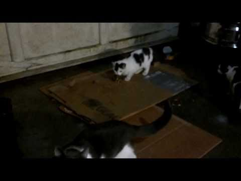 How to train kittens to hunt mice