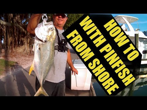 Catching Kiago Fish (what?) How I Catch  Jack Crevalle on Pinfish