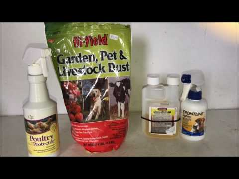 Controlling Mites & Lice on Chickens
