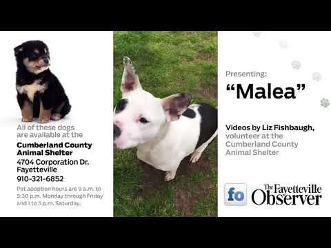 Adoptable dogs in Fayetteville, N.C.