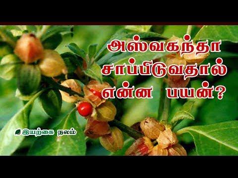 அஸ்வகந்தா சாப்பிடுவதால் என்ன பயன்? | Amukkira Powder Benefits in Tamil