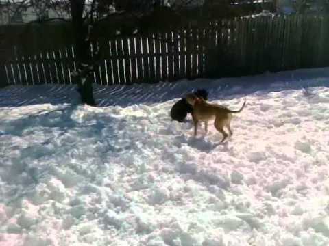 Strange Dog In Yard (Dog Jumps Fence) EPIC!