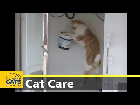 Free Ways to Occupy your Bored Cat
