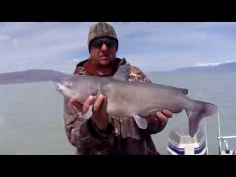 Utah lake fishing 2018