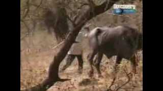 """Gir National Park India - Discovery Channel - """"Gir - Realm of Asiatic Lion"""" - Part 3"""