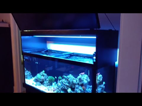 Reef Tank Build Episode 4: Lights and Canopy.