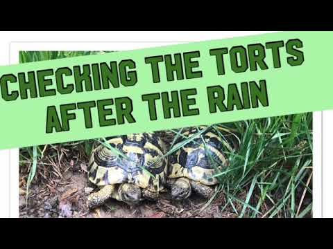 Checking our animals during and after the rain