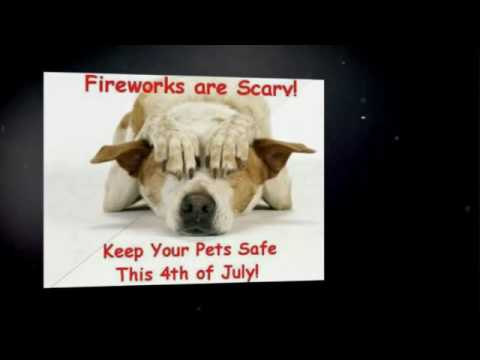 4Th of July Dog Walking | 702-527-8070 | Pet Sitters of Las Vegas | Holiday Dog Walker