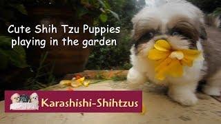 Karashishishihtzus Videos