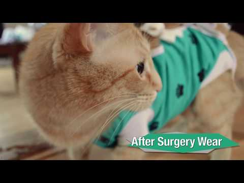 After Surgery Wear vs. Traditional E-Collar