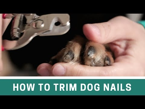 How to Trim Dog Nails with Clippers and File - The Alternative Cut Line