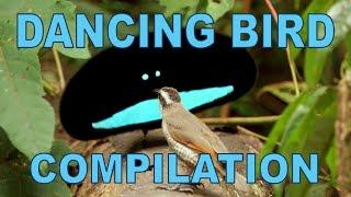 Weird \u0026 Wonderful Dancing Birds Compilation (Part 1)