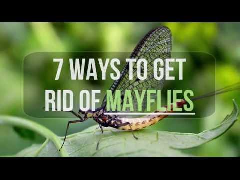 7 Ways to Get Rid of Mayflies