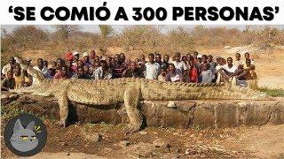 10 Animales Más Temidos De La Historia
