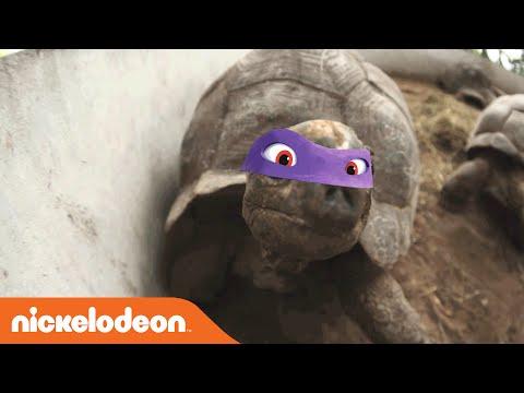 Teenage Mutant Ninja Turtles | Not So Ninja Turtles Part 2 | Nick