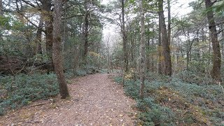 aokigahara forest Videos - 9tube tv
