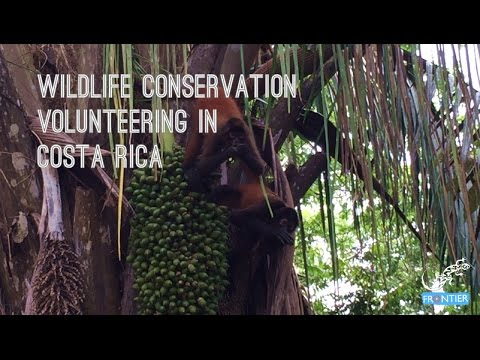 Wildlife Conservation - Volunteering in Costa Rica