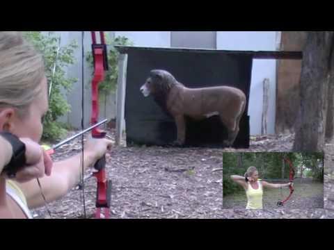 Archery Target Practice on Lion