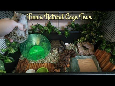 Lesser Tenrec Naturalistic Cage Tour || Midwest Critter Nation