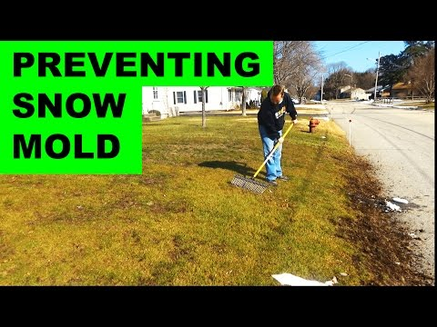How to prevent and get rid of snow mold