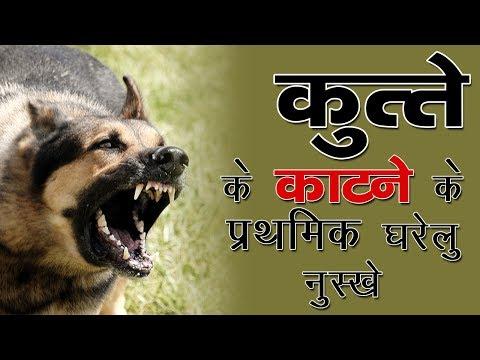 कुत्ते के काटने के प्राथमिक घरेलु उपचार || Dog Bite Treatment In Hindi || The Health Guru
