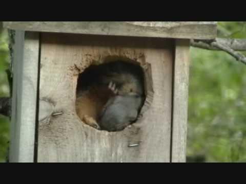 Mom Squirrel feeding baby squirrel