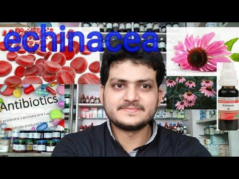 Echinacea! Homeopathic medicine echinacea?? antibiotic??