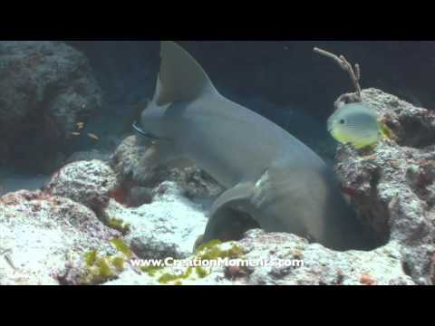 Is The Shark A Living Fossil (Part 2 of 2)