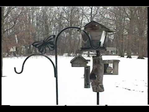 Birds & Squirrels at the Bird Feeder
