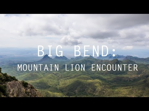 Big Bend: Mountain Lion encounter on Lost Mine Trail