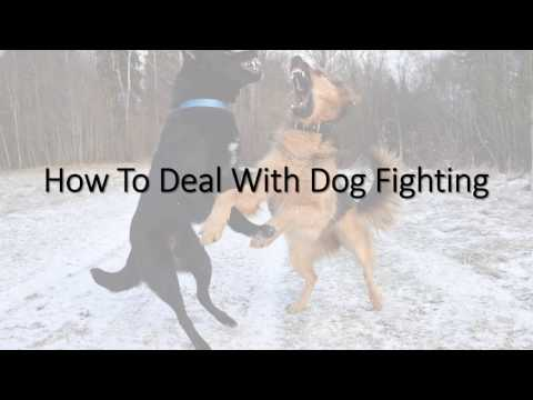 How to Prevent Your Dog from Fighting