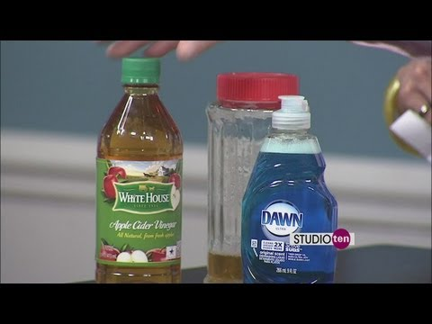 Studio10: Getting rid of fruit flies - Molly Maid