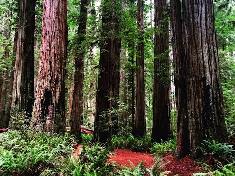 A hike amongst the giants - Redwood National Forest