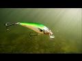 Salmo fishing lures for pike muskie bass perch zander in action underwater. Воблеры для щуки и окуня