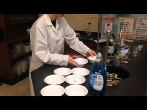 Homemade Tapioca Pearls