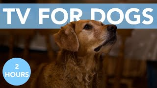 BIRD EXTRAVAGANZA TV FOR DOGS! With Relaxing Music for Sleep
