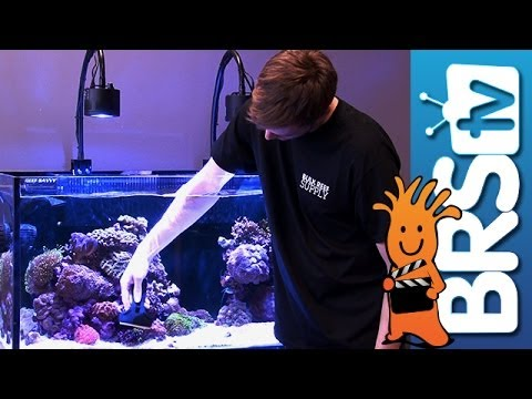 Tips to Keep Your Aquarium Glass Clean - EP 3: Saltwater Aquarium Maintenance