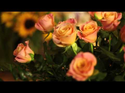 How to Cut Roses to Make a Vase : Everything Flowers