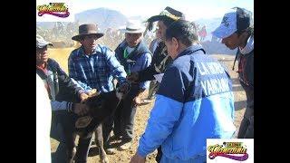 La Hora Yancaina: Recuerdo Del Rodeo Yancaino