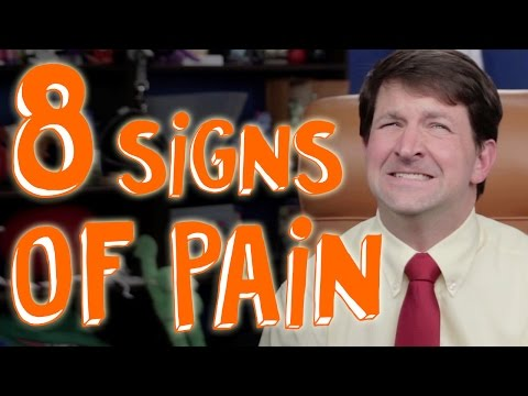 8 Secret Signs Your Pet is in Pain