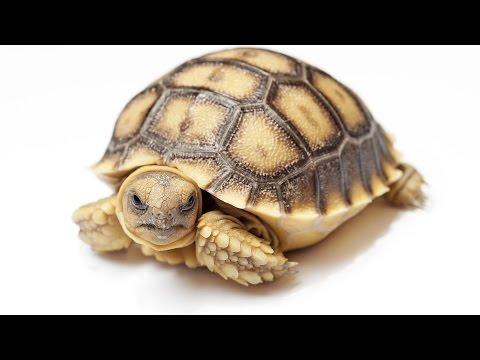 Tortoise Winter Care