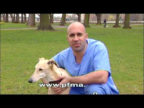 PFMA Pet Size-O-Meter (DOGS)